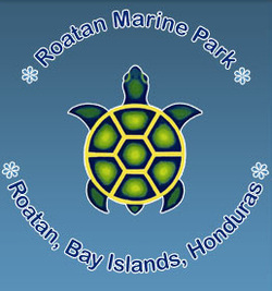 Roatan Marine Park Things to Do